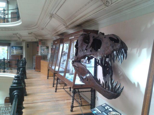 Primer planta museo geominero