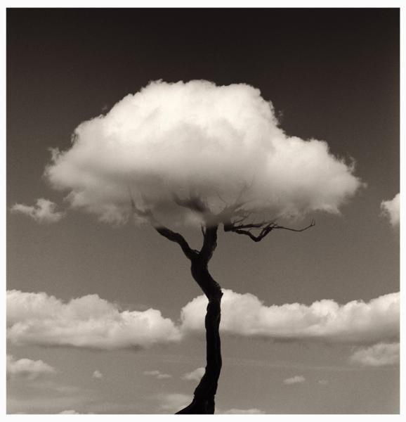 Chema Madoz árbol nube